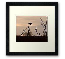 Cormorants roost Framed Print