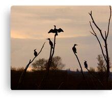Cormorants roost Canvas Print