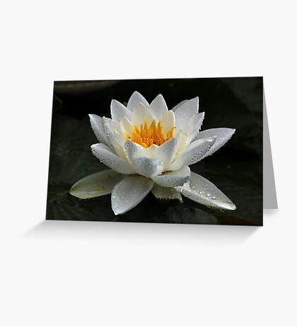 White WaterLily Greeting Card