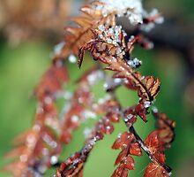 Crystalised nature by sherele