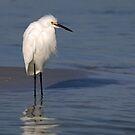Snowy Egret by JimSanders