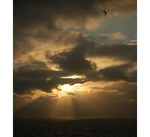 sun-bird Photographic Print