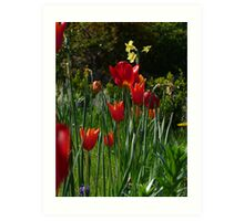 Low Tulip Art Print