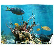 Underwater marine life Poster