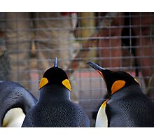 Role Reversal: Penguins at the Human Enclosure Photographic Print