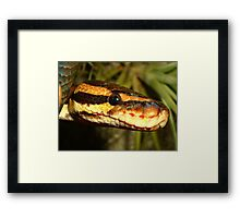 Reptile Royalty Framed Print