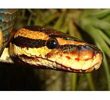 Reptile Royalty Photographic Print