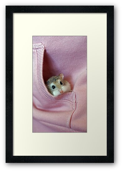 Fluffy the hamster by James Mamo