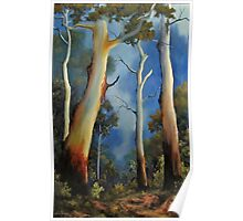 Gum tree view Poster