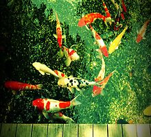 Koi in Circles by the-novice