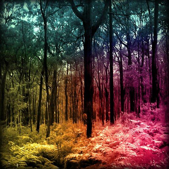 Quick Forest by James McKenzie