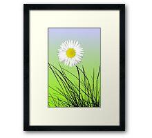 Noble daisy Framed Print