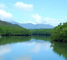 Mangrove forest in Palawan, Philippines by walterericsy