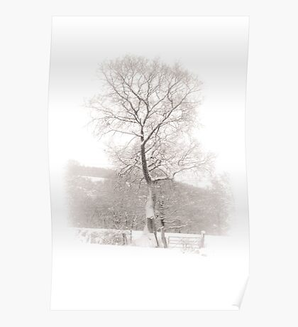 Solitary Tree in Snow Poster