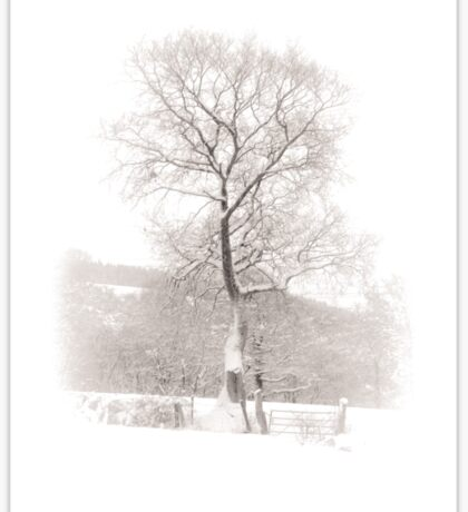 Solitary Tree in Snow Sticker