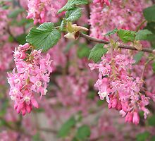 Pink Cascade by Elaine Game