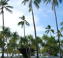 Dos Palmas resort swimming pool by walterericsy