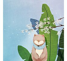 White Socks Series: Bear Under Sakura Blossom Photographic Print