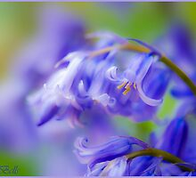 Blue Bells. by CJTill