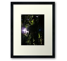Madagascan Rainforest Framed Print
