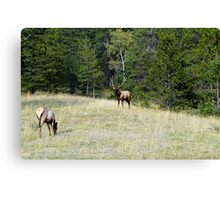 The Warden - Bull Elk and Cow Canvas Print