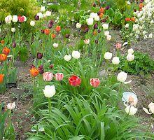 Tulip World by MarianBendeth