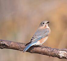 Blue Bird by EugeJ