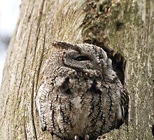 Half asleep! by Tracey  Dryka
