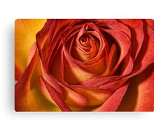 Just a Rose Canvas Print
