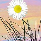 Daisy in front of pastel sky by KatDoodling