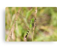 Green Dreams Are Made Of This Canvas Print