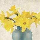 Daffodils by Darren Fisher