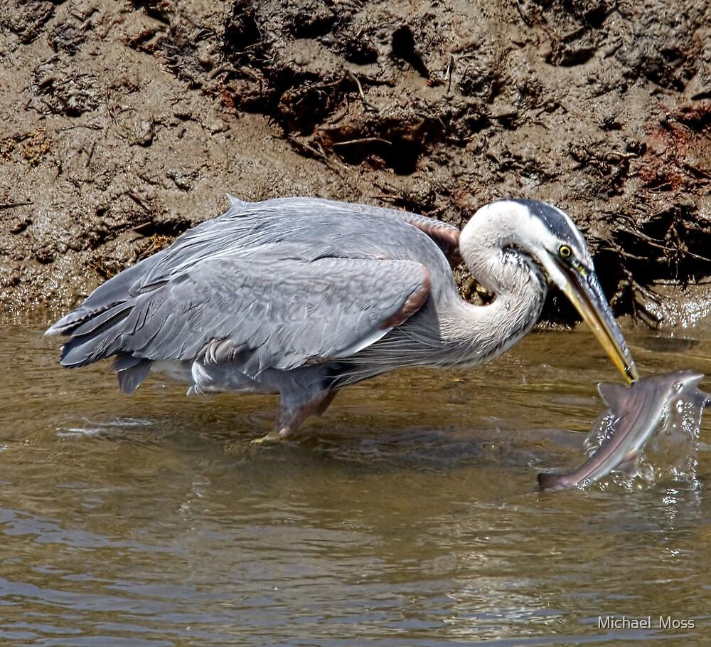Blue Heron Fishing by Michael  Moss