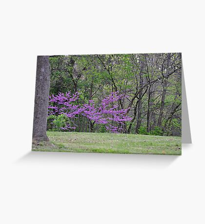 Redbud Tree 4/22/10 Greeting Card