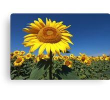 Sunflower 1 Canvas Print
