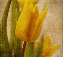 Yellow Tulips  by Ana CB Studio