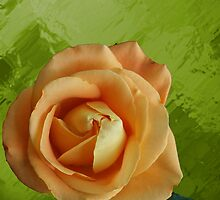 Peach of a Rose by Rick  Friedle
