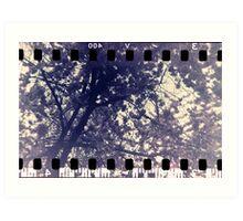 Blossom tree - Leamington Spa, May 2010 Art Print