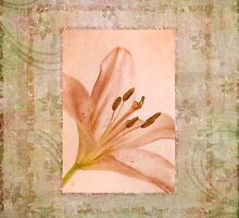 Pink Lily by Ana CB Studio