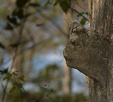bark face by JimSanders