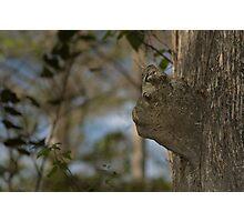 bark face Photographic Print
