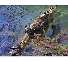 Turtles7 Photographic Print