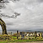 Upland Ponies 2 by Brian Beckett
