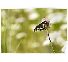 Le Papillon Poster