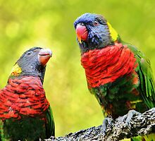 Two Rainbow Lories by Cynthia48