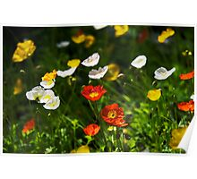 Popping Poppies Poster