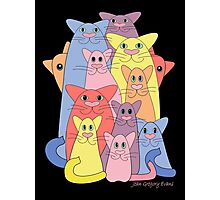 Twelve Cats For Happiness Photographic Print