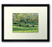 Country COWZ! Framed Print