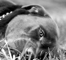 Dog 9799 b&w by João Castro