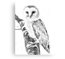 European Barn Owl Canvas Print